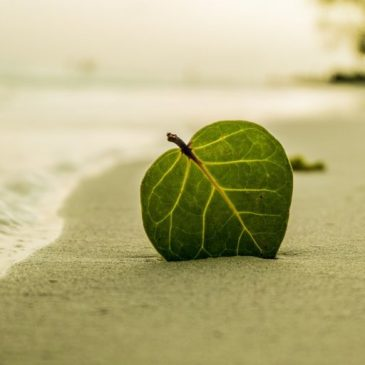 Beach - Leaf- Relaxing - Stress Relief