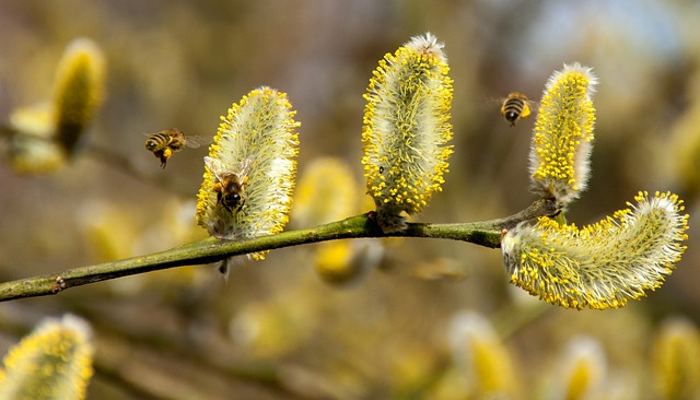 bees-2142571_640
